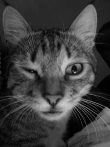 28. Crazy Cat